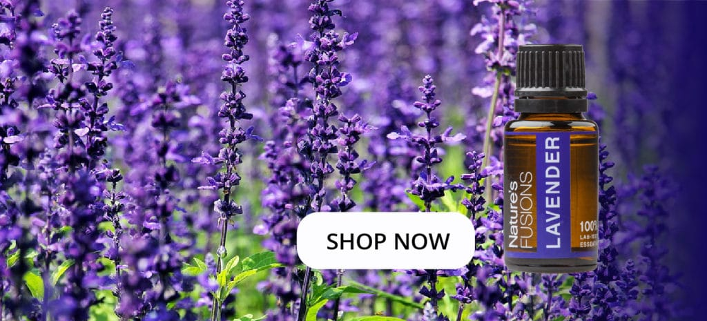 """lavender flowers with oil bottle and clickable """"SHOP NOW"""""""