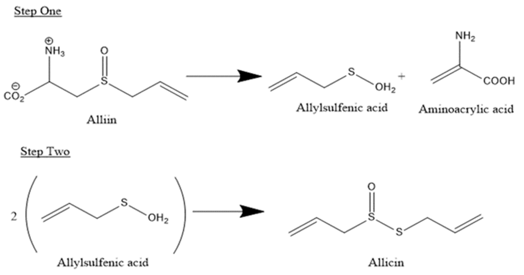 chemical conversion alliin to allicin