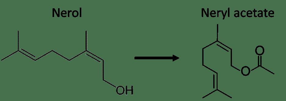 model: Nerol to Neryl acetate
