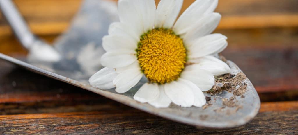 flower in trowel