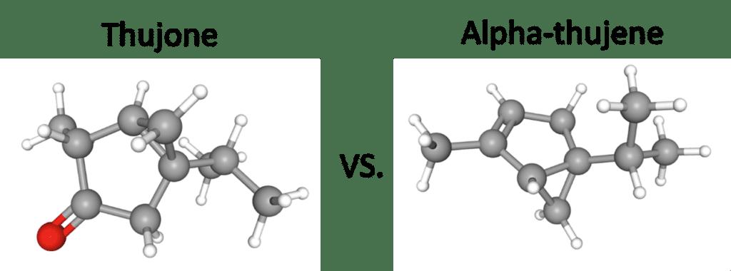 thujone and alpha-thujene